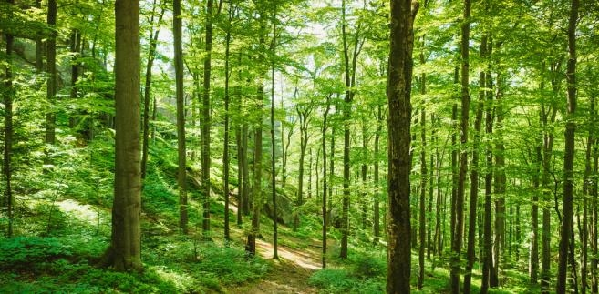 Dyżur inspektora ds. leśnictwa Starostwa Powiatowego w Kraśniku